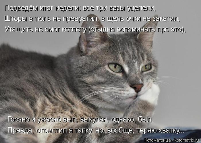 Свежая котоматрица подарит хорошее настроение