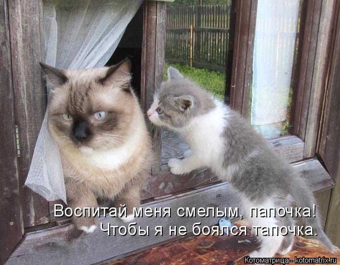 kotomatritsa_8 (700x545, 364Kb)