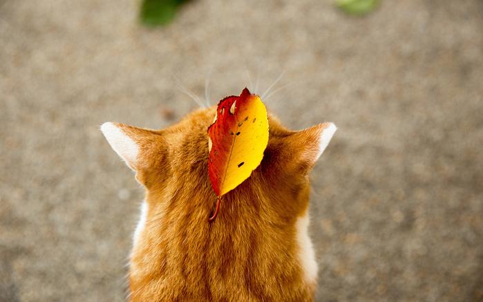 Cats_Autumn_Foliage_460402_1920x1200 (700x437, 129Kb)