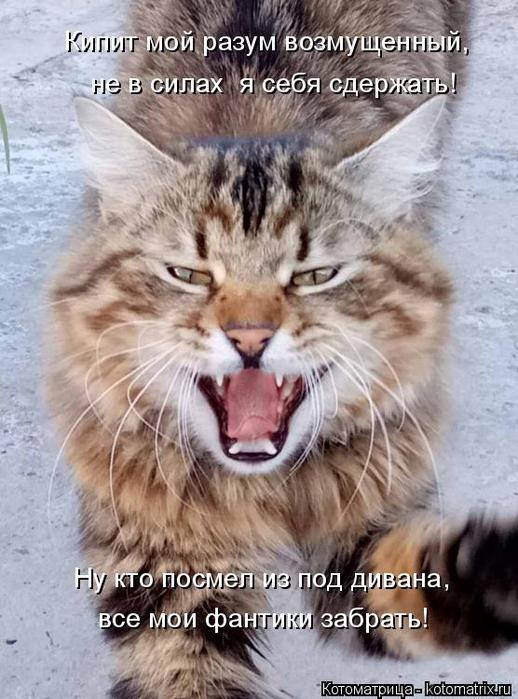 kotomatritsa_E (518x700, 342Kb)