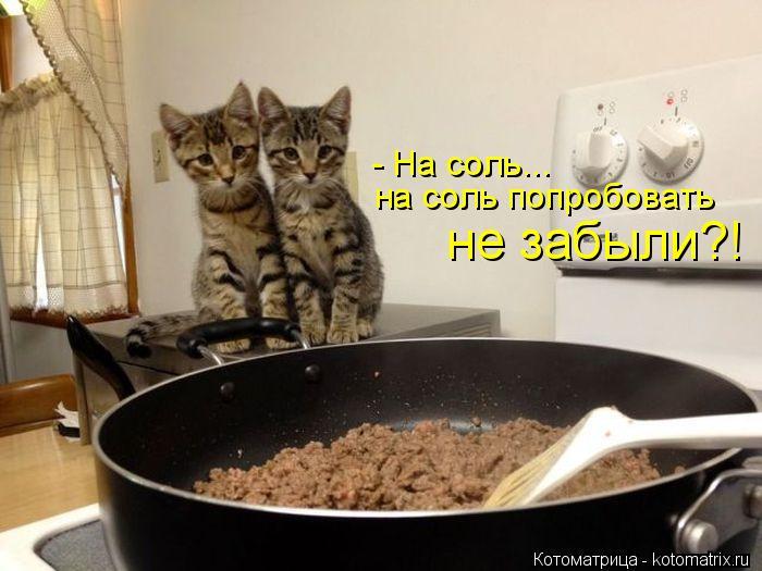 kotomatritsa_J (700x525, 212Kb)