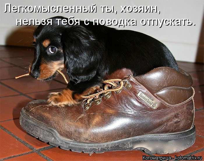 kotomatritsa_p (700x554, 244Kb)