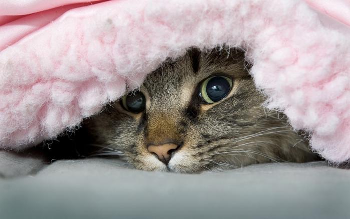 cats-animals-peeking-1152x720 (700x437, 284Kb)