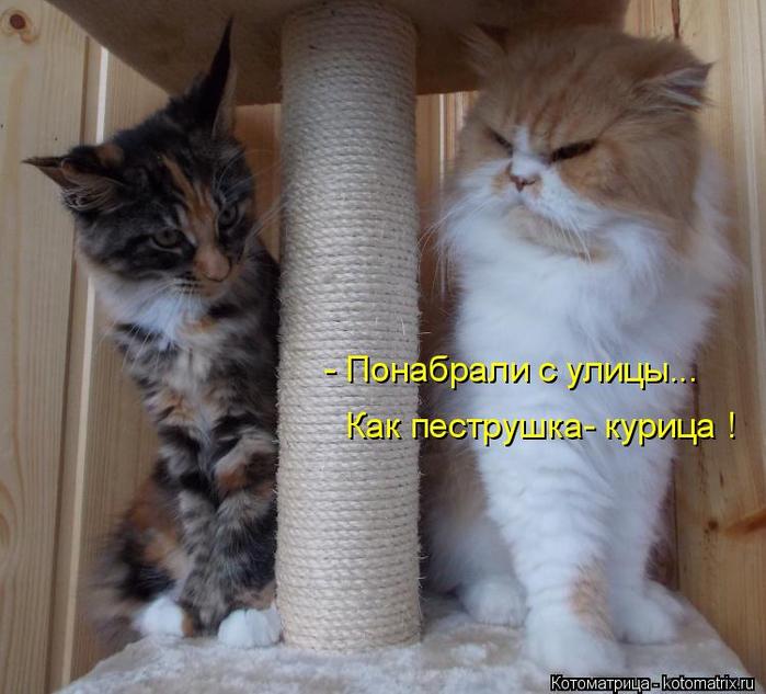 kotomatritsa_5 (700x633, 358Kb)