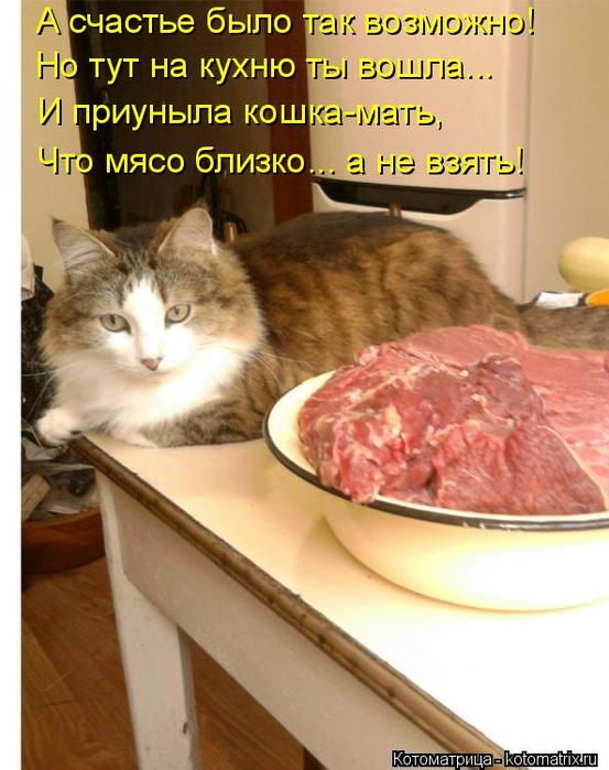 kotomatritsa_bH (553x700, 373Kb)