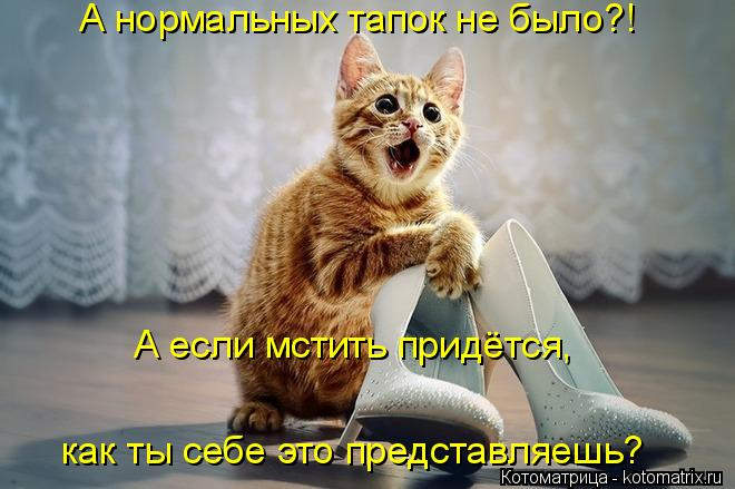 kotomatritsa_K (660x439, 220Kb)