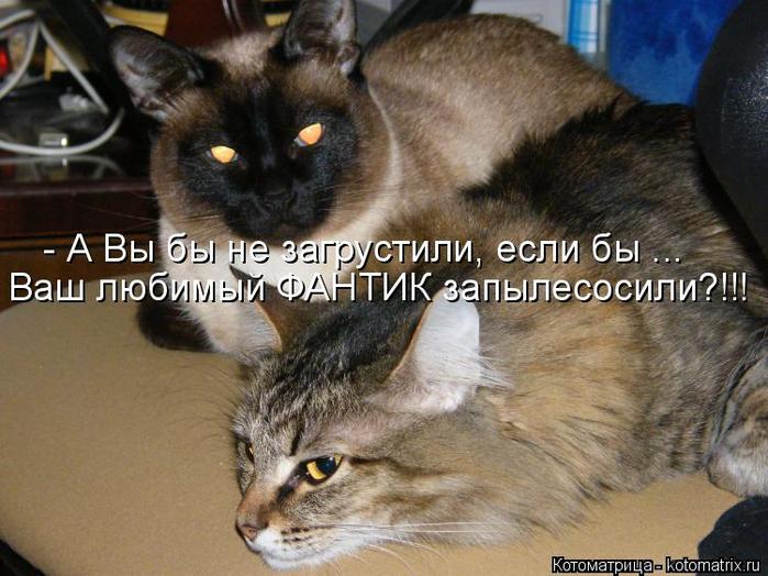 kotomatritsa_nT (700x524, 376Kb)