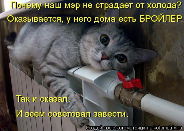 kotomatritsa_s (600x429, 209Kb)