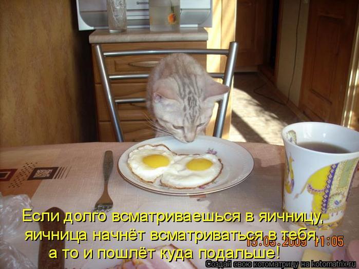 kotomatritsa_E (700x524, 380Kb)