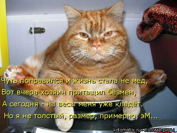 kotomatritsa_7v (599x449, 258Kb)