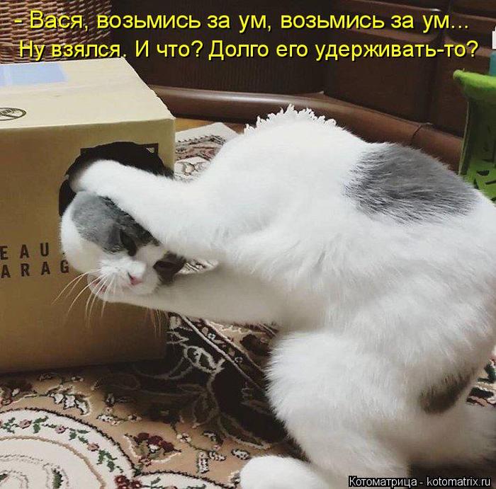 kotomatritsa_T (700x691, 443Kb)