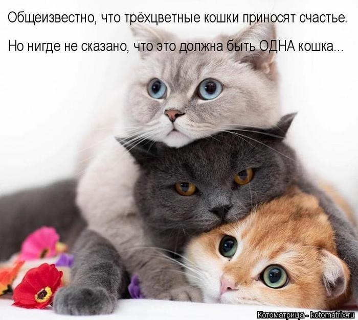 kotomatritsa_vG (700x627, 298Kb)
