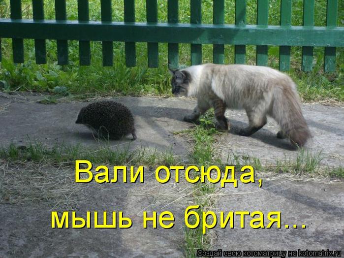 kotomatritsa_K (700x524, 421Kb)