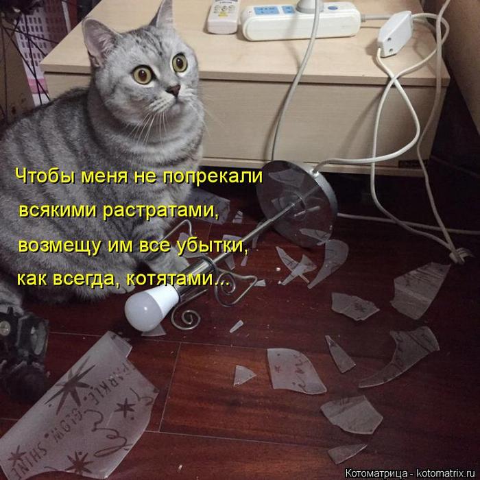 kotomatritsa_o (700x700, 431Kb)
