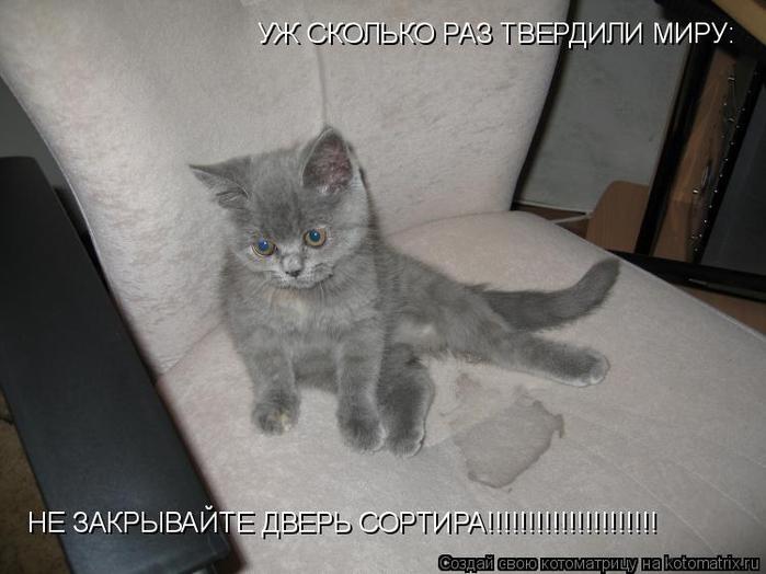 kotomatritsa_l (700x524, 235Kb)