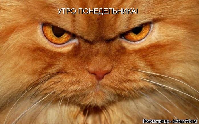 kotomatritsa_M (700x437, 308Kb)
