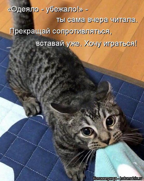 kotomatritsa_u (1) (556x700, 382Kb)