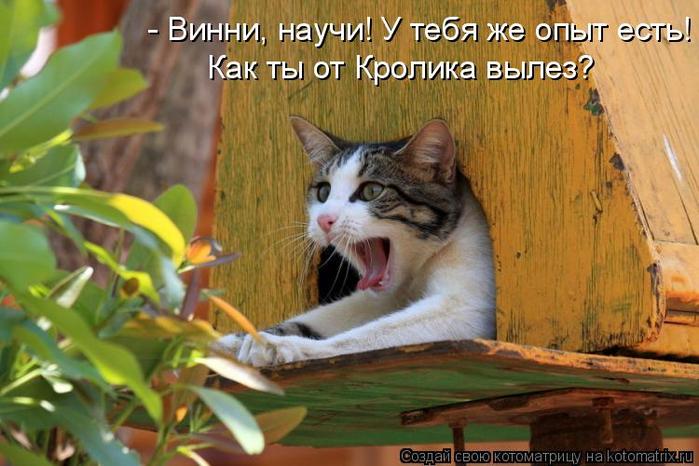 kotomatritsa_V (700x466, 369Kb)