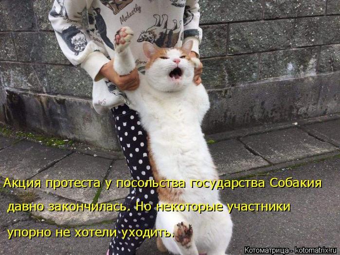 kotomatritsa_t (1) (700x524, 412Kb)