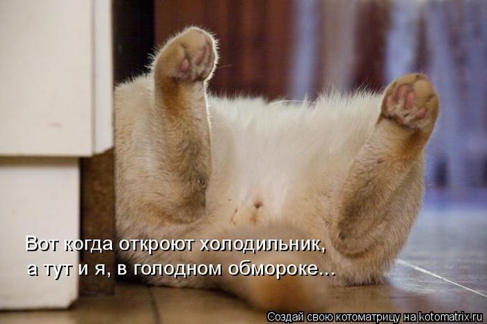 kotomatritsa_p (700x466, 257Kb)