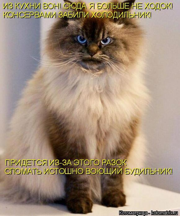 kotomatritsa_T (581x700, 377Kb)