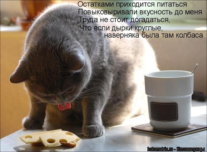 kotomatritsa_v (1) (700x513, 306Kb)