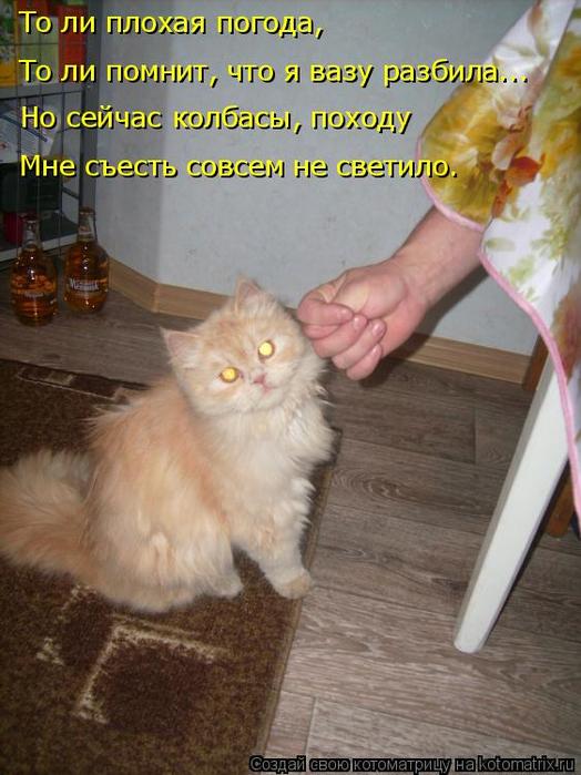 kotomatritsa_E (524x700, 361Kb)