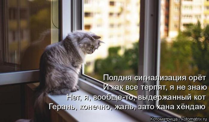 kotomatritsa_I (700x408, 257Kb)