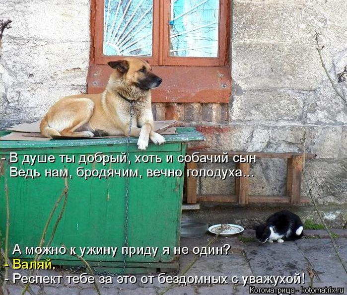 kotomatritsa_m (1) (700x594, 486Kb)