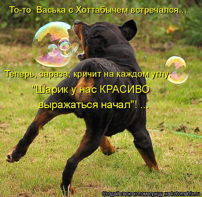kotomatritsa_mT (650x634, 458Kb)