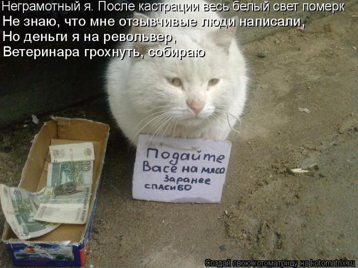 kotomatritsa_ZM (700x524, 344Kb)