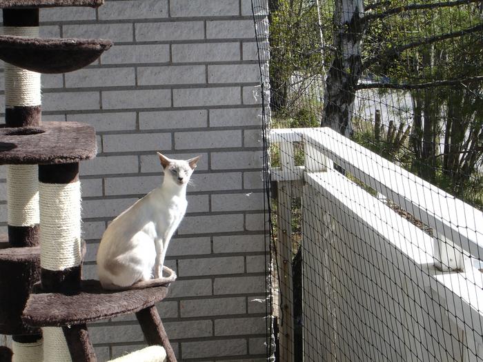 kediyle-birlikte-ev-tasima-patiliyo-8 (700x525, 501Kb)