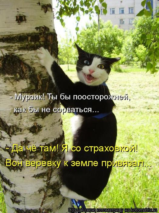 kotomatritsa_lK (524x700, 454Kb)