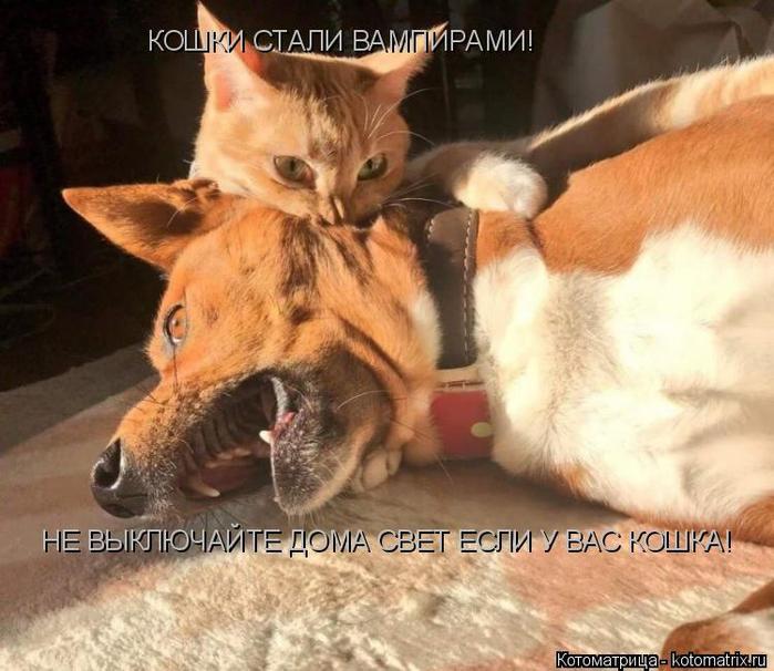 kotomatritsa_q (700x606, 389Kb)
