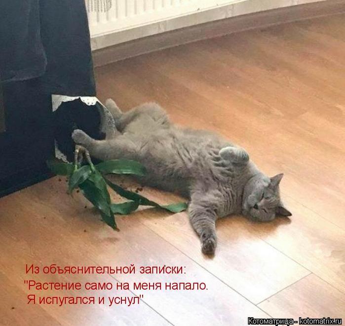 kotomatritsa_S8 (700x660, 352Kb)