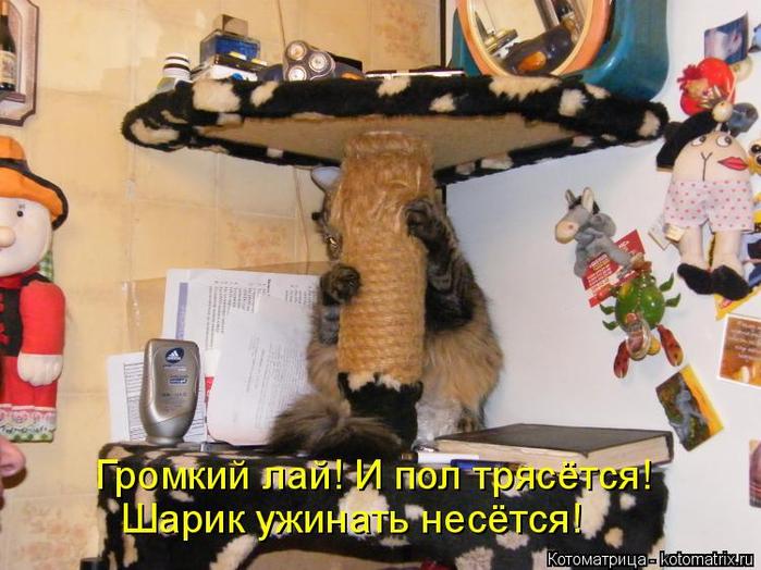 kotomatritsa_u (700x524, 389Kb)
