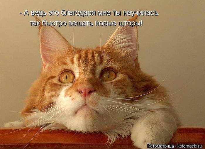 kotomatritsa_g_ (700x508, 295Kb)