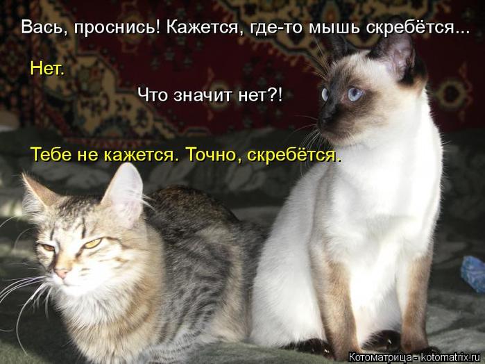 kotomatritsa_l (700x524, 324Kb)