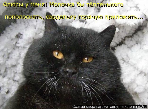 kotomatritsa_o3 (626x462, 183Kb)
