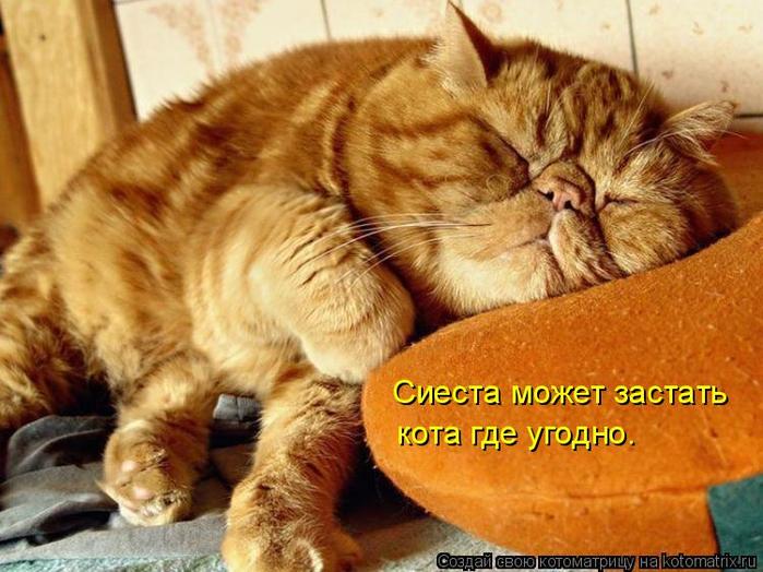 kotomatritsa_cP (700x524, 409Kb)