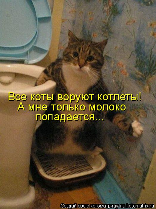 kotomatritsa_l (523x700, 277Kb)