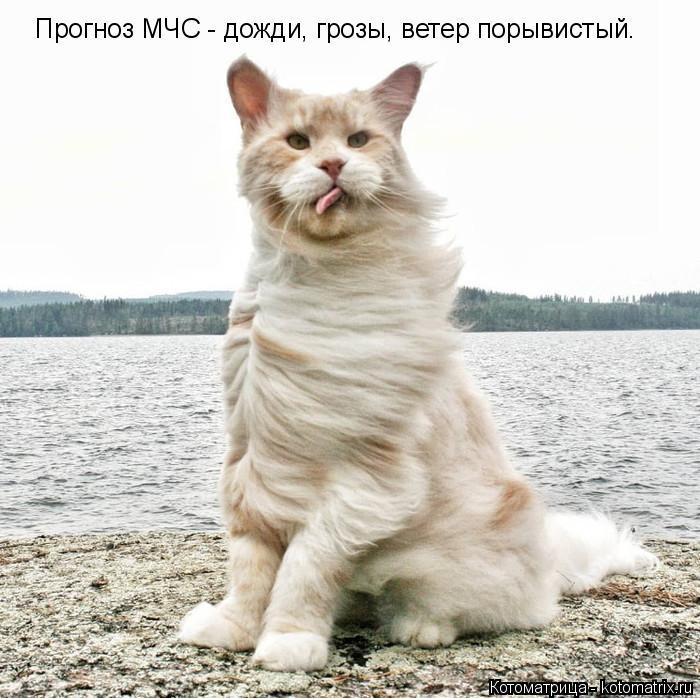 kotomatritsa_Q (700x698, 240Kb)