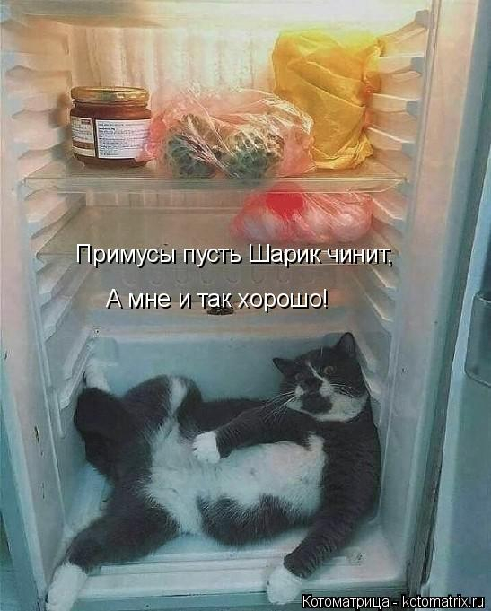 kotomatritsa_r (547x681, 207Kb)
