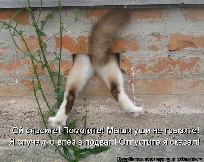 kotomatritsa_w (2) (700x553, 394Kb)