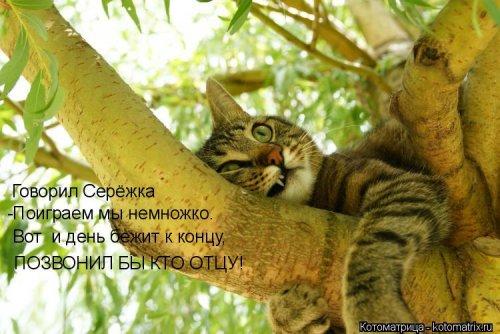 1561744783_kotomatrica-27 (500x334, 168Kb)