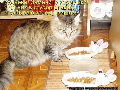 1561744804_kotomatrica-16 (500x375, 178Kb)