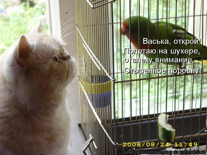 kotomatritsa_B (700x524, 388Kb)