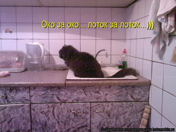 kotomatritsa_Kb (700x524, 348Kb)