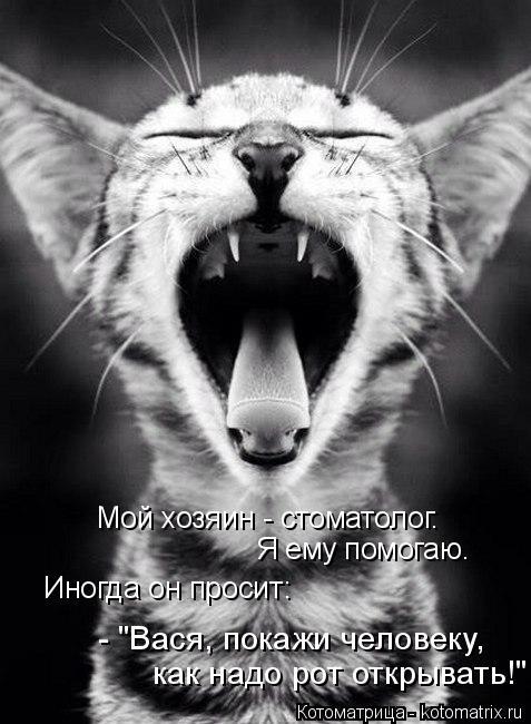 kotomatritsa_V (477x650, 130Kb)