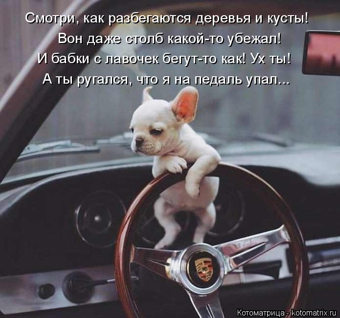 kotomatritsa_2 (695x650, 210Kb)